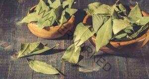За да привлечете късмет в дома си, ви трябват дафинови листа