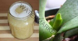 Чеснов деликатес за вашата орхидея: обилният цъфтеж е гарантиран