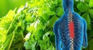 Магданозът ще ви помогне да се избавите от болката в гърба