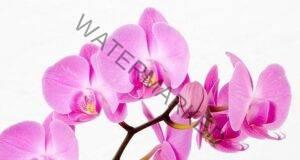 Магическото значение на орхидеите във вашия дом