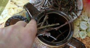 Рецепта с вишневи клонки при уринарна инконтиненция