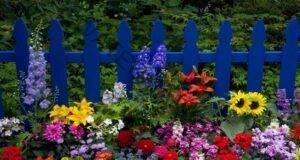 Ето как да имате най-красивите цветя в целия квартал