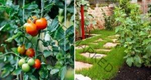 Създайте нов облик на градината си с тези полезни идеи
