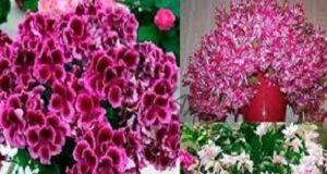 С този трик цветята ще ви радват с пищните си цветове дълго време