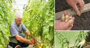 Тези продукти заместват химията в градината успешно