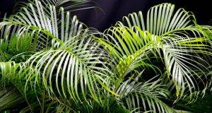 Те произвеждат кислород през нощта: 9 растения, които да имате