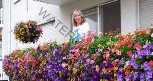 5 непретенциозни балконски цветя, които цъфтят от пролет до есен