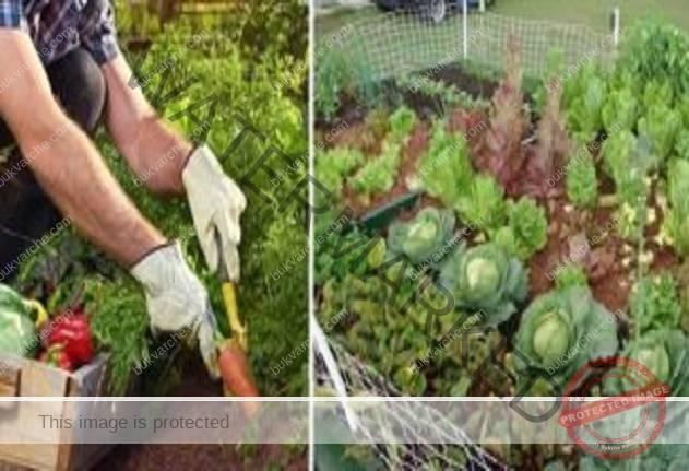 За да имате богата реколта, необходима ви е само една съставка