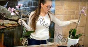 Как да накарате орхидеята да цъфти само с една съставка?