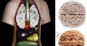 Тези 9 продукта лекуват точно органите, на които приличат