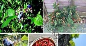 Топ 8 билки, които подобряват кръвообращението