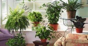 Уникален естествен тор за стайните ви растения