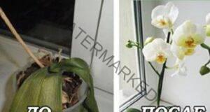 7 важни тайни за отглеждане на орхидеи у дома