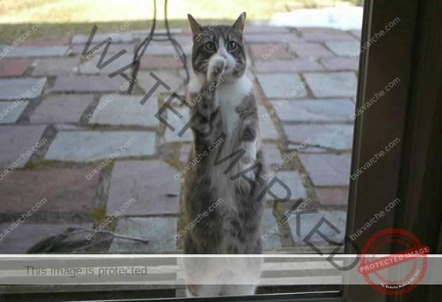 В къщата ви е дошла котка: ето какво предвещава това