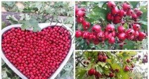Лек за сърце, високо кръвно налягане, холестерол и диабет