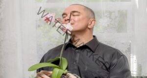 Грижи за орхидеята след закупуването й за обилен цъфтеж
