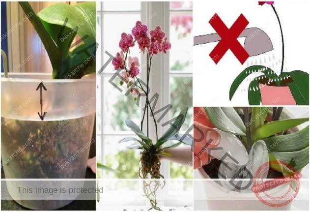 Пълно ръководство за отглеждане на орхидеи у дома