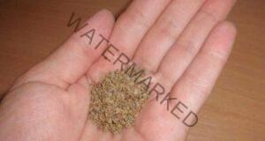 Семената от магданоз регулират кръвното налягане