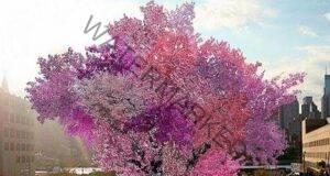 Уникално хибридно дърво, което дава 40 вида плодове