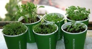 Възстановете дишането при настинка с тези 3 растения в дома си