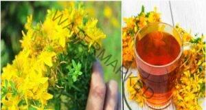 Жълт кантарион при болка в ставите - ценни рецепти
