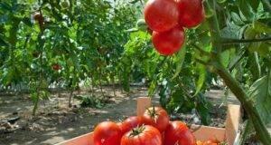 Защитете растенията си от гъбични заболявания с този разтвор!