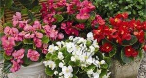 За буен цъфтеж и листна маса, поливайте растенията с това!