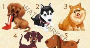 Изберете едно куче, за да разберете дали желанието ви ще се сбъдне!