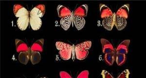 Изберете пеперуда и узнайте повече за своите мисли и чувства!