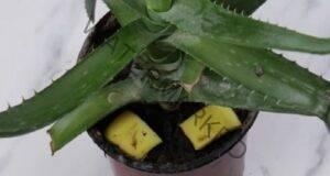 Не изхвърляйте банановите кори - ето как да ги използвате!