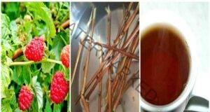Отвара от малинови клонки възстановява здравето