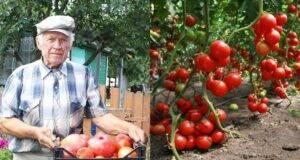Подхранвайте доматите за да имате здрава реколта