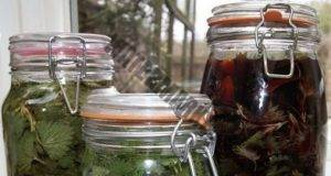 Ракия с коприва и зелени орехи за пречистване