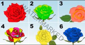 Розата ще разкрие силните качества на личността ви