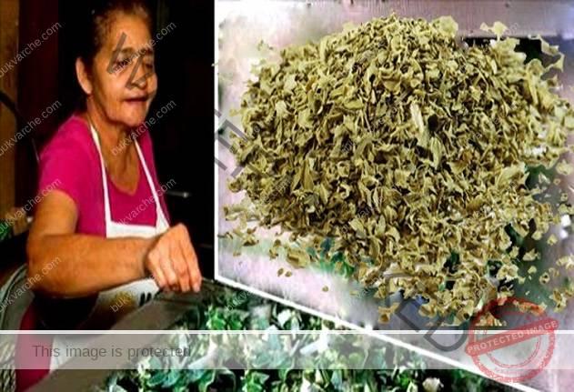 Чай от риган почиства организма и подобрява храносмилането