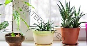 6 стайни растения, които облекчават стреса и пречистват въздуха