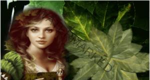Дафиновият лист сбъдва желанията и носи успех