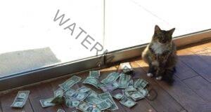 Ето как тази котка донася пари на служителите в офиса