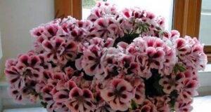 Малка хитрост: цветята в дома ви ще цъфтят пищно и дълго
