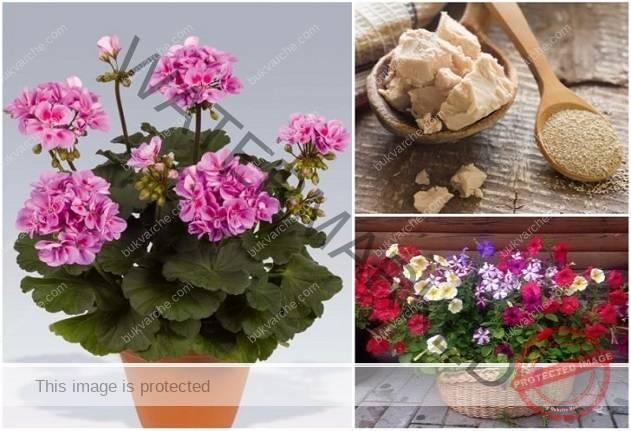 Най-добрите средства за подхранване на стайните растения