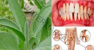 Най-мощното растение за лечение на рани, язви, инфекции и гъбички