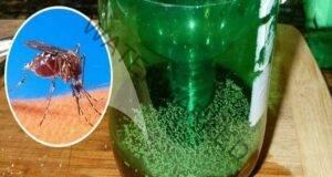 Най-простият капан за комари, направен със собствените ви ръце