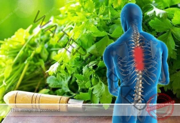 Напитка с магданоз при болки в гърба, ставите и артрит
