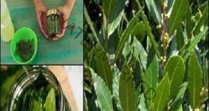 Дафинов лист при разширени вени и болки в ставите