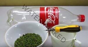 Невероятно полезен трик за покълване на бобовите растения