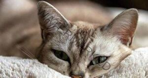 Вашата котка ще ви покаже дали в дома ви има мир и покой