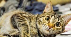 Лечебните способности на котките - ето как те ви помагат