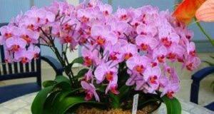 Орхидеята ви ще цъфти през цялата година - 7 тайни
