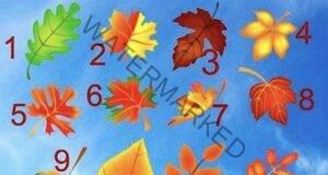 Гадание с листо: Разберете дали ще се сбъдне желанието ви!