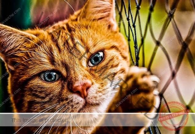 Мощна енергия на котките - ето как те улавят негативните вибрации